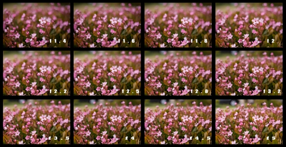 DOF Comparison of Flowers